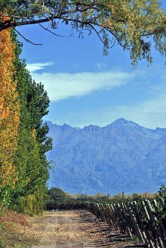 Mendoza Mi tierra !!!!!!!! Easy Jet, Beautiful Waterfalls, Countries Of The World, Nature Pictures, Solo Travel, South America, Places To Travel, Tourism, Travel Photography