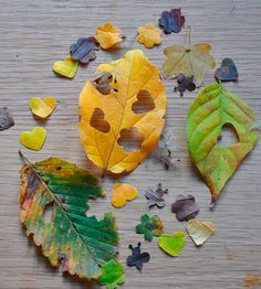 Use different shape cutters to get a selection of natural confetti shapes