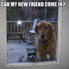 Funny dog & racoon pic... For the best joke pics visit www.bestfunnyjokes4u.com/rofl-best-funny-joke-pic/