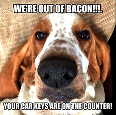 We're out of bacon. Your keys are on the counter! - Basset Hound