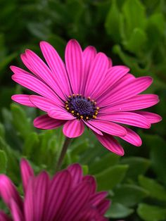 Deep Pink Margarita Flowers Plus even more ideas at www.milanevent.com