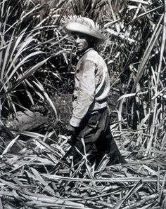 Las pavas y su historia artesanal en Puerto Rico   El punto es…