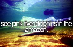 See pink river dolphins in the Amazon
