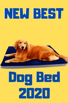 I you want to know Top 7 Best Dog Beds 2020(Brand New) in amazon and with great review then this post is all about you.pet parent should know the best new dog bed for large and small dog also.this is the best Online pet store on amazon. #amazon #ads #bestdogbeds #dog #animal #largedogbeds Dog Beds For Small Dogs, Cool Dog Beds, Large Dogs, Online Pet Store, Good News, Ads, Amazon, Animals, Big Dogs