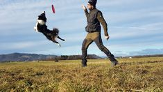 Bildergalerie - www.lets-dog.com Bald Eagle, Dogs, Animals, Pictures, Animales, Animaux, Doggies, Animal, Pet Dogs