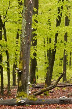 Wald, Wasser und Berge. Das #Sauerland – hier leben wir. © Klaus-Peter Kappest