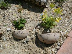 Sandarium – Magerbeet – ausführliche Baudokumentation – Hortus Girasole Plants, Delphinium, Peonies, Plant, Planets