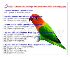 Akhilchandrika : Example of couplings for Opaline Fischeri and Gree...