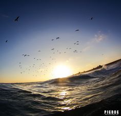 Birds Flying Over The Wedge! Visit www.pigdogphotography.com to purchase prints or to see more images