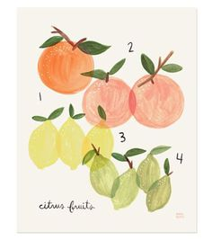 love this citrus fruit print {cute for the kitchen}