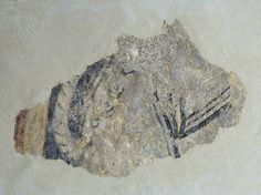 Vestigis de quadrúpede de Boí | Museu Nacional d'Art de Catalunya
