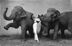 Richard Avedon Dovima with Elephants (1955)   Not a shocking construction for our times, but the jarring juxtaposition of Dior silk and leathery pachyderms was certainly creatively extraordinary for the '50s. It remains the most celebrated photo in fashion-photography history.
