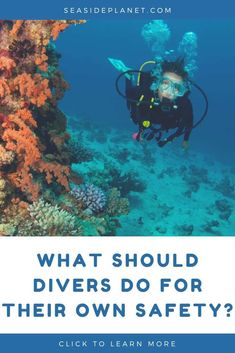 If you like going diving or snorkeling you know that water can seep in to your mask. Were here to help you find the best scuba mask with purge valves. Scuba Diving Equipment, Scuba Diving Gear, Cave Diving, Scuba Diving Certification, Cozumel, Cancun, Tulum, Maui Vacation, Royal Caribbean Cruise