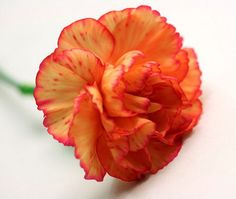 Red and orange carnations