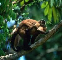 Resultado de imagem para animais de floresta