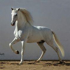 Insane beauty. ~ETS #perfection
