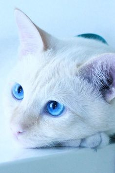 stunning eyes