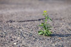 Are Grit and resiliency keys to our success? In a word - YES.  http://www.alignmentinc.com/blog/2015/03/resiliency-and-grit-spring-is-indeed-here/