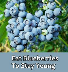 Learn what eating Blueberries can do for you