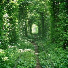 The tunnel of love An explosion Ucrania.El green tunnel of love Le Tunnel, Tunnel Of Love, Best Places To Travel, Places To Visit, Wonders Of The World, In This World, Ukraine, Misty Forest, Landscape Photos