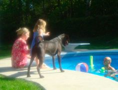 Mia who was 3 at the time would never stand near him or pet him. Mia & Hubbell bonded....she must have felt something...