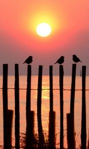 Sparrows on the Fence • EXTEND YOUR LIFE > http://www.foreverhealthywater.com/