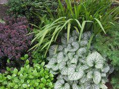 Tia's garden in Washington, Berberis, Kinnikinnick, amsonia, Crocosmia, Larix, Brunnera and Ceratositigma