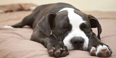 Petition: Breed Specific Legislation Is Discriminatory, Ineffective And Should End Now
