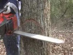 """This vid teaches a lot about tree falling accurately and safely - pay particular attention starting at minutes and notice how he leaves a portion of the trunk (the """"strap"""" or """"trigger"""") that is cut very last, after wedges are placed, for control & safety Chain Saw Art, Firewood Logs, Tree Surgeons, Tree Felling, Husqvarna, Farm Gardens, Autumn Trees, Chainsaw, Garden Tools"""