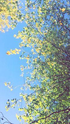 Grappenhall heys