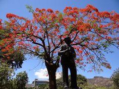 Mauritius la raspantiile Oceanului Indian: Port Louis, capitala insulei