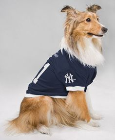 New York Yankees Dog Jersey Medium Hunter Manufacturers Cubs Merchandise 5eef85353
