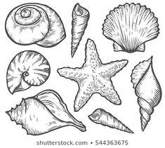 Seashell Sea Shell Starfish Nature Ocean Stock Vector (Royalty Free) 467823620