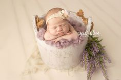lexington ky newborn photographer baby girl - bucket posing - lavender - sweet Bloom Photography