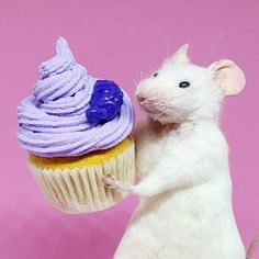 Coloured Icing, Cupcake Birthday, Pet Store, Gold Paint, Taxidermy, Guinea Pigs, How To Take Photos, Eat Cake, Squirrel