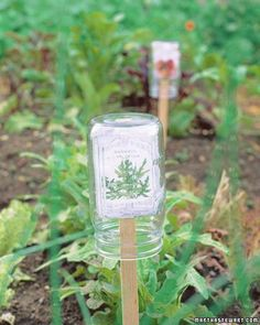 Attach seed packets to wooden stakes by slitting the bottom of the paper with a knife and sliding the stake through; shield each marker under a small inverted mason jar.