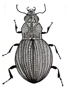 beetle illustration https://www.google.co.uk/search?q=millie+marotta&safe=strict&biw=1280&bih=930&source=lnms&tbm=isch&sa=X&sqi=2&ved=0CAYQ_AUoAWoVChMI0_nx35jdxgIV4hfbCh3gfAoG