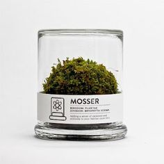 I'd love a little Mosser ball as my pet plant and I'll call him Bryophyta.