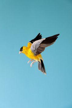 The Paper Birds of Diana Beltran Herrera -