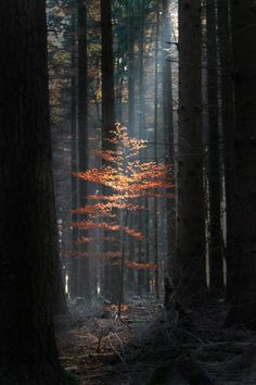 Untitled by Niklas Passmann Trees forest nature Beautiful World, Beautiful Places, Beautiful Pictures, All Nature, Amazing Nature, Photos Of Nature, Nature Pictures, Tree Forest, Forest Light