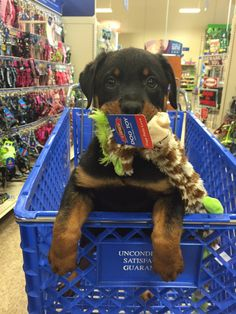 I'll take 3! | A community of Rottweiler lovers!