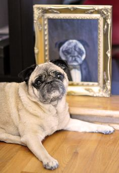 ...love Maegan ~ Fashion, DIY, Home, Lifestyle: Custom Victorian Dog Portraits ~ blog