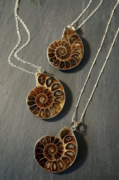 Ammonite Fossil ⊿ Ammonite Necklace ⊿ Ammonite Pendant ⊿ Prehistoric Relic ⊿…