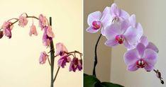 Dette uventede trick fik Helens orkidéer til at blomstre op Orchid Plants, Orchids, Orchid Care, Love Is All, Houseplants, Tricks, Flower Pots, Planting Flowers, Helpful Hints