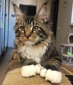 65 Hemingway Cat Names – Polydactyl Cat Names