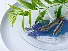 遅い春からのメッセージ 球磨川の稚鮎 セモリナ粉姿揚げ