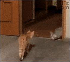 """""""Oh sh*t, it's a cat!"""""""