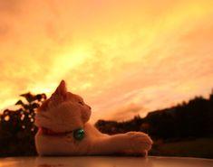 2011.09.09 ゆうやけ