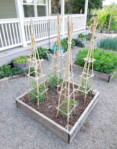 Great tutorial for a bamboo tomato cage! Very sturdy and functional, plus a lot better looking than the wire cages!