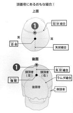 頭・顔面の筋肉と骨格の解剖学【頭の構造について】 - NAVER まとめ